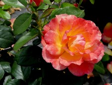 Missa inte trädgårdsdagarna på Liseberg