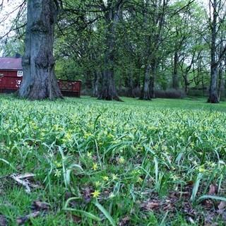 Slottsskogen är en av alla platser att njuta av våren i Göteborg!